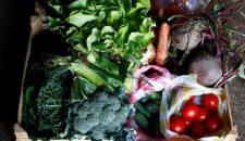 O idee de afacere creativa in agricultura din zona Brasovului